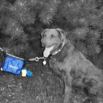 Dog waste bags carried on dog leash accessory
